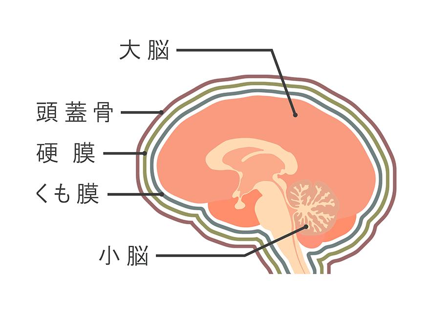 頭蓋の構造